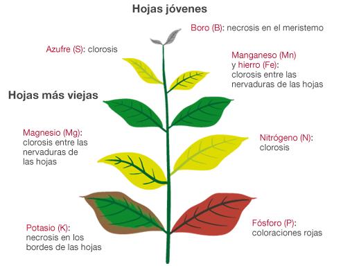 Cómo identificar las deficiencias nutricionales de las plantas con ...